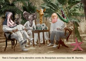 Les belles cartes postales de Bébert Plonk & Replonk – Collection «L'Univers à l'envers» – Test à l'aveugle de la dernière cuvée du Beaujolais Nouveau chez M. Darwin.