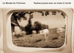 Vaches jouant avec un train