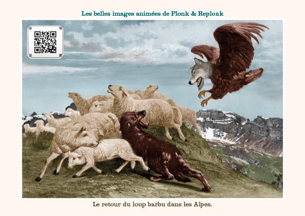 Le retour du loup barbu dans les Alpes.